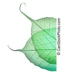 vacker, bladen, gröna vita, gräns, över