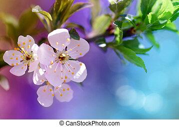 vacker, blomma, blomningen