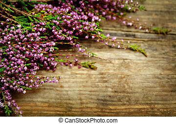 vacker, blomma,  -, suddig, Trä, ved, bakgrund, blommig, Blomstrar