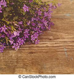 vacker, blommig, bakgrund, med, blomningen