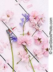 vacker, blommig, fjäder, bakgrund, med, japansk, körsbär, blomningen
