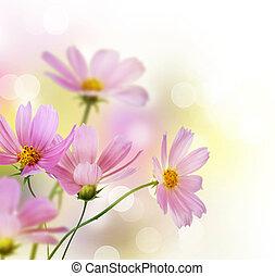 vacker, blomningen, border., blom formgivning, över, vit