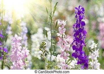 vacker, blomningen