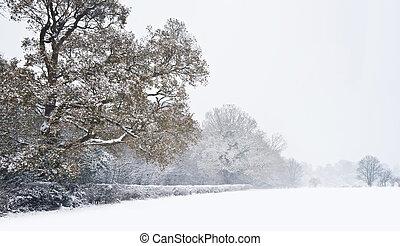 vacker, distans, vinter, snö, djup, scen, oskuld, träd, ...