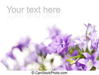 vacker, färska blomstrar, över, vit fond