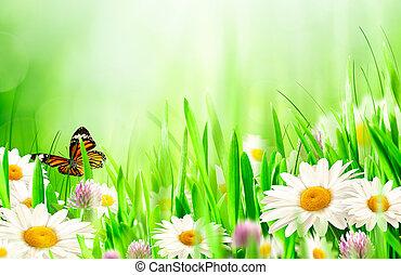 vacker, fjäder, bakgrunder, med, kamomill, blomningen