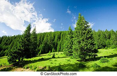 vacker, fjäll landskap