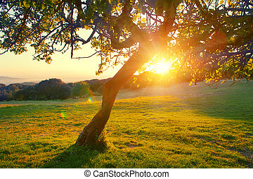 vacker, fjäll, natur, landskap., alpin, äng, med, a, träd, över, solnedgång