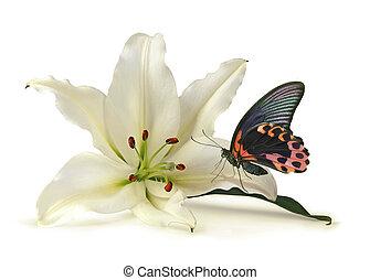 vacker, fjäril, ögonblick, vit lilja, stilla
