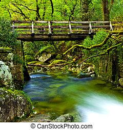 vacker, flod