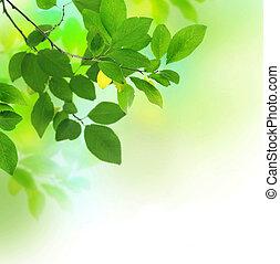 vacker, frisk, bladen, grön