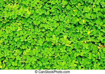 vacker, gräs, grön, struktur