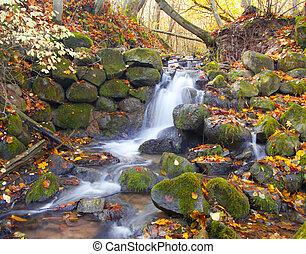 vacker, höst, vattenfall, skog, kaskad