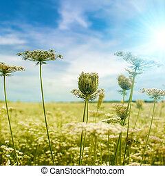 vacker, höstlig, bakgrunder, med, vild blommar, under, blå himmel