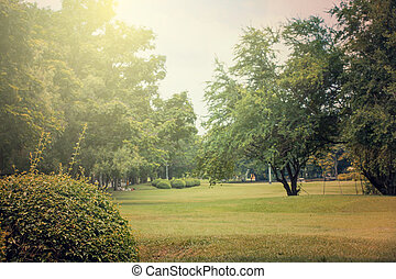 vacker, in, publik parkera, med, grönt gräs, fält, och, grön, frisk, träd, växt, perspektiv