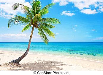 vacker, koh, kokosnöt, lanta, thailand, palm., strand