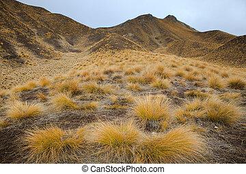 vacker, land, scape, av, gräs, knippn, fjäll, in, waitaki,...