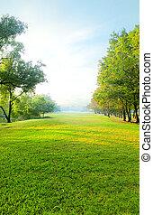 vacker, morgon, lätt, in, publik parkera, med, grönt gräs, fält, en