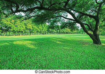 vacker, morgon, lätt, in, publik parkera, med, grönt gräs, fält, och, grön, frisk, träd, växt, perspektiv, till, avskrift tomrum, för, universal