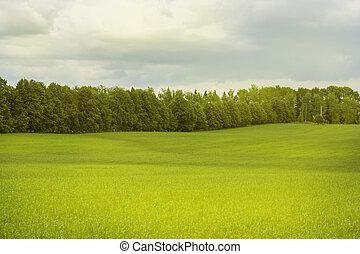vacker, morgon, lätt, in, publik parkera, med, grönt gräs, fält, och, träd