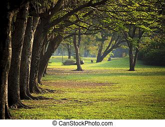 vacker, morgon, lätt, in, publik parkera, med, grönt gräs, fält
