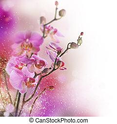 vacker, orkidé, gräns