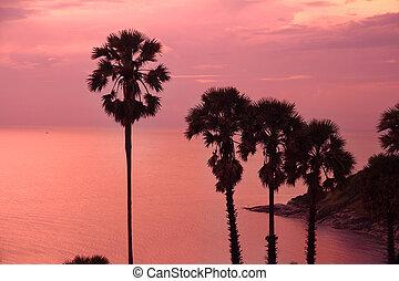 vacker, purpurfärgad solnedgång, med, palmträdar, silhuett