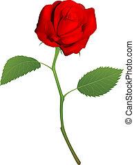 vacker, ro, röd, illustration
