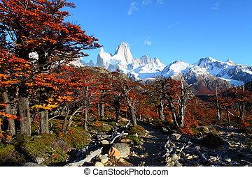 vacker, roy, natur, nationalparken, fitz, fjäll., landskap, sett, argentina, patagonia, los, glaciares