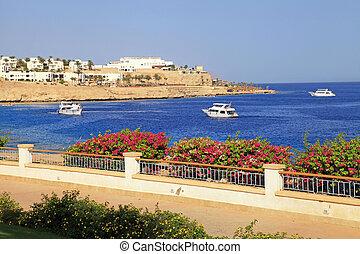 vacker, sjögång se, röd sjögång, egypten