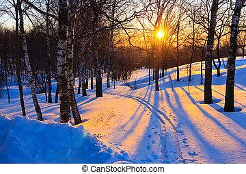 vacker, solnedgång, in, vinter, skog