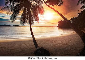 vacker, solnedgångsky, på havet, strand, med, par, av, kokosnöt träd