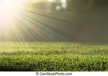 vacker, sommar, äng, effect., sol, lysande, belyst, bokeh, grön fond, gräs