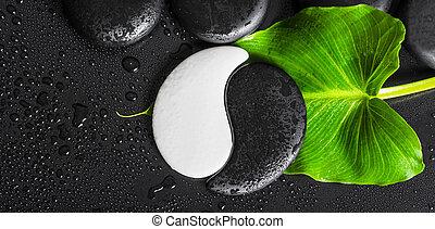 vacker, sten, begrepp, blad, panorama, topp, zen, struktur, symbol, nedåt, grön, kurort, stenar, dagg, yin-yang, svart