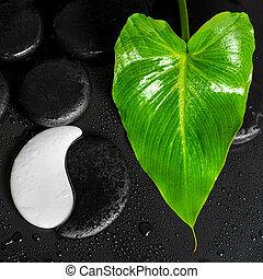vacker, sten, begrepp, blad, yin-yang, kurort, zen, uppe, struktur, dagg, grön fond, nära, stenar, lilja, calla, svart