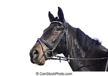 vacker, svart, isolerat, häst