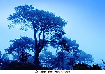 vacker, träd, hos, dimmig, morgon