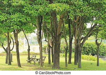 vacker, träd, på, grönt gräs, in, publik parkera