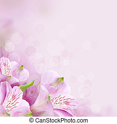 vacker, vår blommar, bakgrund, natur