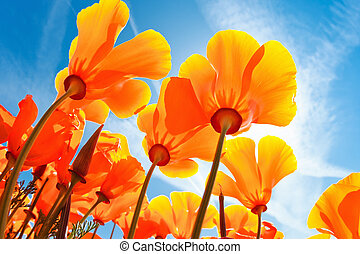 vacker, vår blommar