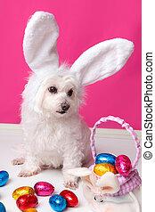 vacker, valp, med, kanin öra, och, påsk eggar