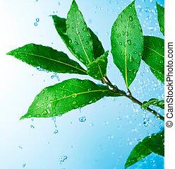 vacker, vatten, bladen, droppar, frisk