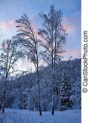 vacker, vinter, landskap.