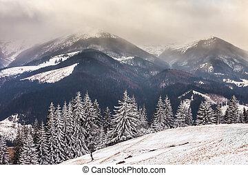vacker, vinter landskap, med, snö täckta träd