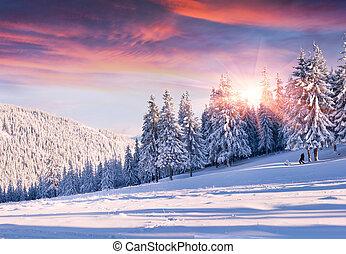 vacker, vinter, morgon, med, snö täckte, träd.
