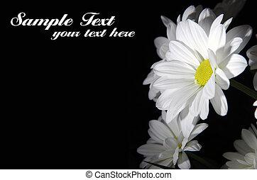 vacker, vita blommar