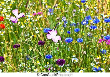vacker, wildflowers, in, den, äng