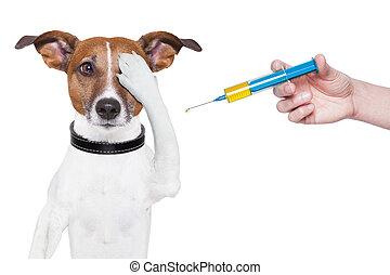 vacunación, perro