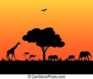 vad, afrika, állatok