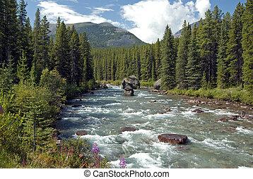 vad, hegy, folyó, erdő